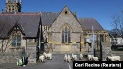 Кози пред црква во Велс на 31 март 2020 за време на пандемијата на коронавирус