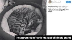 تصویری از اینستاگرام هانیه توسلی پس از مرگ گربه