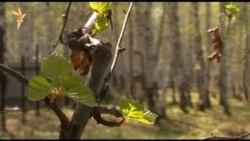 Жители сибирской деревни спасли лес от вырубки