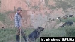Таджикский чабан. Иллюстративное фото.