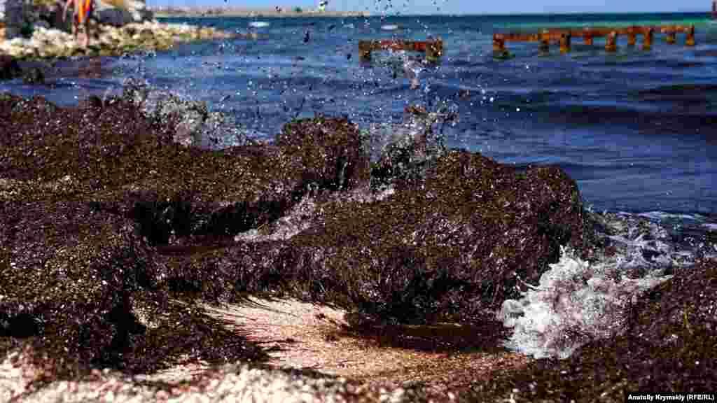Волны разбиваются о кучи водорослей