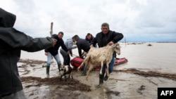 Fermerët duke e shpëtuar bagëtinë gjatë vërshimeve të lumit Vjosa afër qytetit Fier në shkurt të vitit 2015