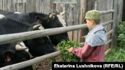 На ферме Василия Шулаковае