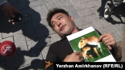 Активист группы «Антигептил» Улан Шамшет во время акции лежит на земле с фотографией сайгаков. Астана, 28 мая 2015 года.