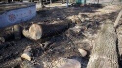 Вырубленные деревья в Центральном парке, Владикавказ