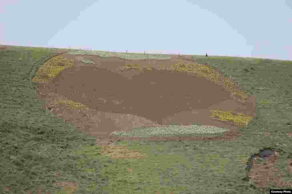 Ала-Тоодо гүлдөгөн Голландия жоогазындары - Анын ортосуна кызыл түстөгү 40 миң жоогазындан турган алоолонгон жүрөк сүрөттөлдү