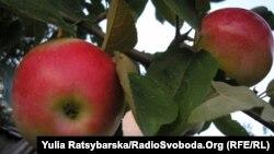 Яблука знову можна експортувати до країн Євросоюзу