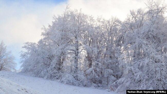 Ветви деревьев в снегу