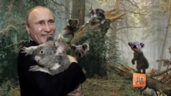Коала и Путин