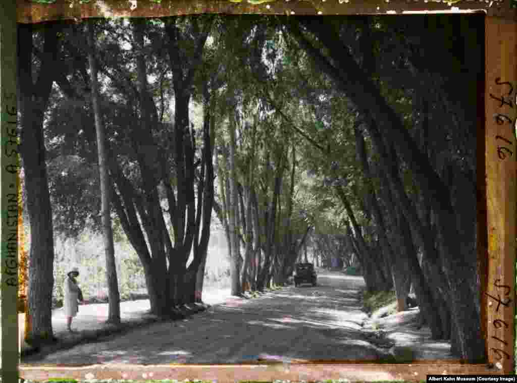 A woman strolling along a tree-lined avenue in Kabul. The Archives of the Planet project was funded by a French banker who sent photographers to more than 50 countries between 1909-31.