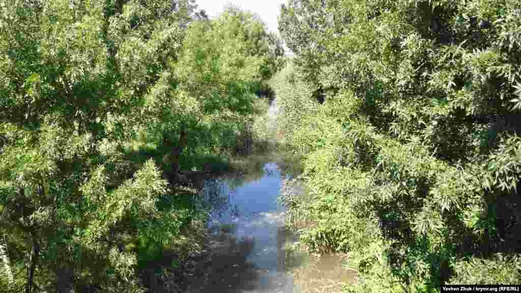 Річка Бельбек цього літа маловодна і вода в ній цвіте