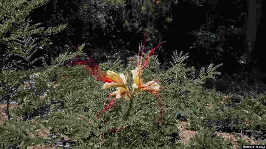 Дивовижна тропічна квітка