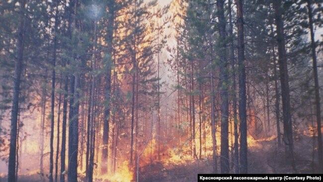 Лесной пожар. Красноярский край