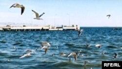 Səngəçal terminalından tutmuş üzü şəhərə doğru bütün sahil əraziləri hasara alınmaqdadır