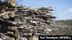 Одно из мест вырубки Химкинского леса