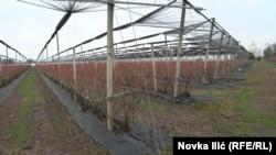 "U Sloveniji je sve ""pod konac"", utisak je poljoprivrednika iz Užica"
