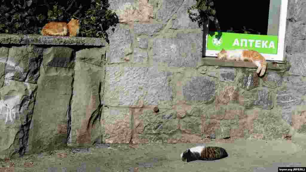 Місцеві коти розляглися на прогрітих сонцем каменях і пішохідних доріжках