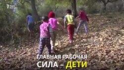 Сабақтың орнына жаңғақ теруге шыққан балалар