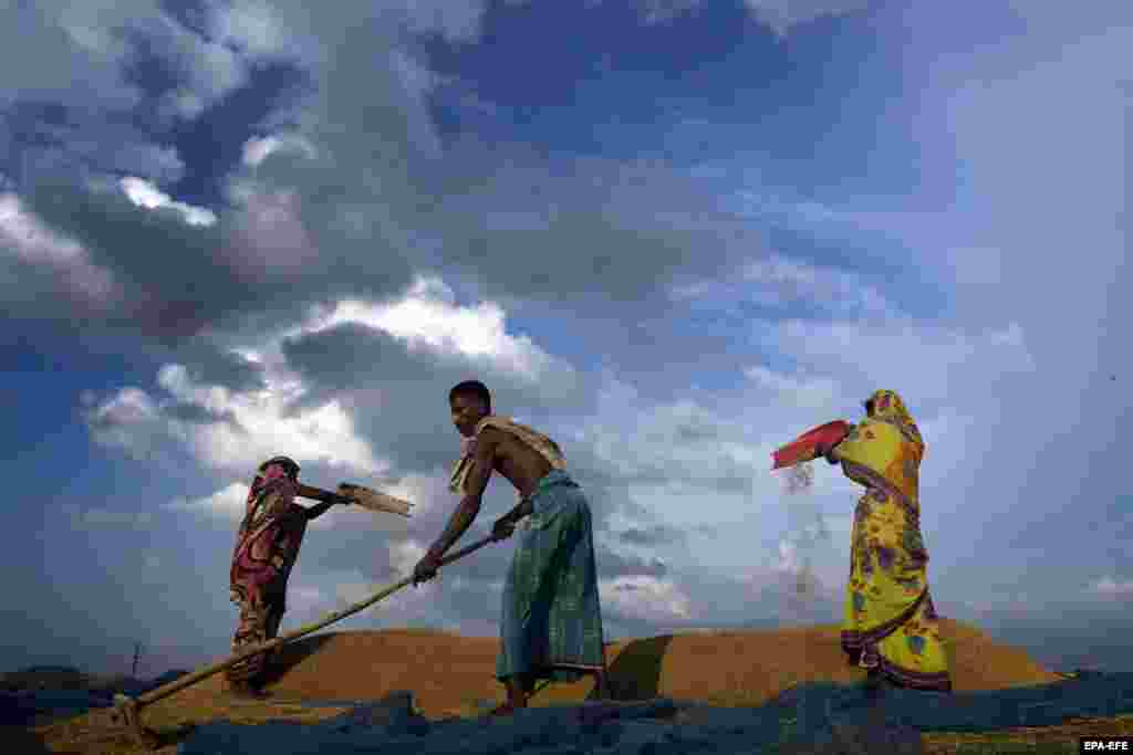 A family dries their harvested Rabi crop on the outskirts of Guwahati, India. (epa-EFE)