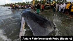 طول بدن نهنگ۲۳ متر گفته شده