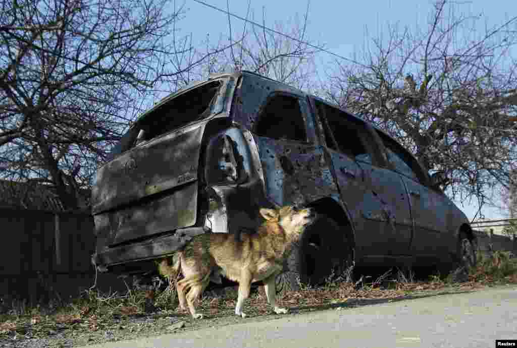 A dog barks in front of a car damaged by recent shelling in the village of Krasnyi Pakhar near Donetsk in November 2014.