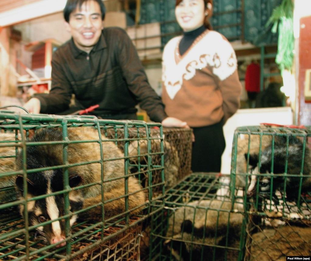 Қытайдың оңтүстігіндегі Гуанчжоу қаласы базарында сатуға қойылған сүтқоректі жыртқыш аң – циветтің қасында тұрған адамдар.