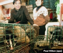 Civet cats being sold for meat in a market in Guangzhou in southern China.