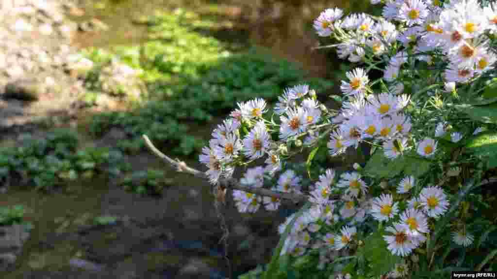 Квіти схилилися над маленьким Суатканом