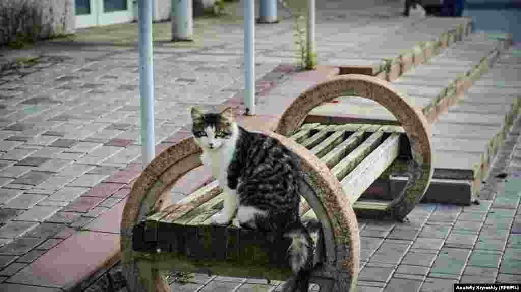 В местах былого скопления авиапассажиров можно встретить дворовых кошек.