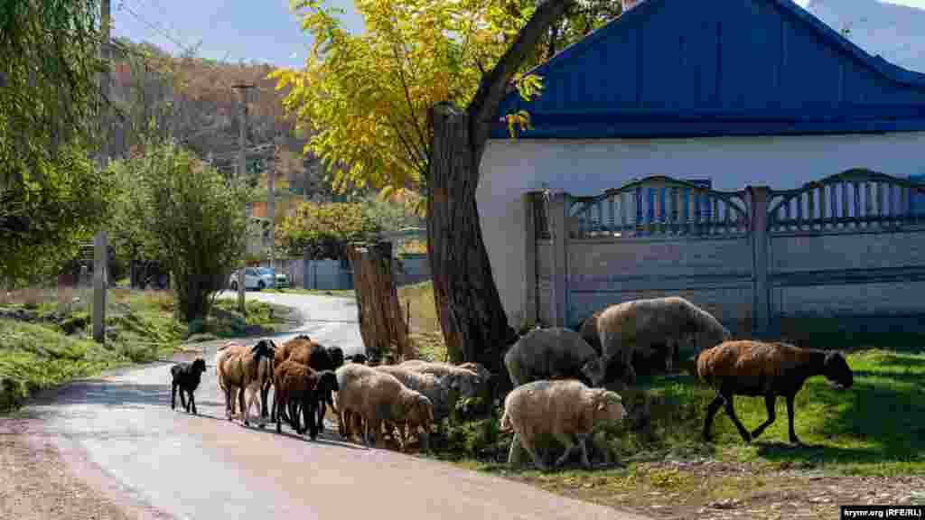 На вулиці Садовій вівці самі по собі