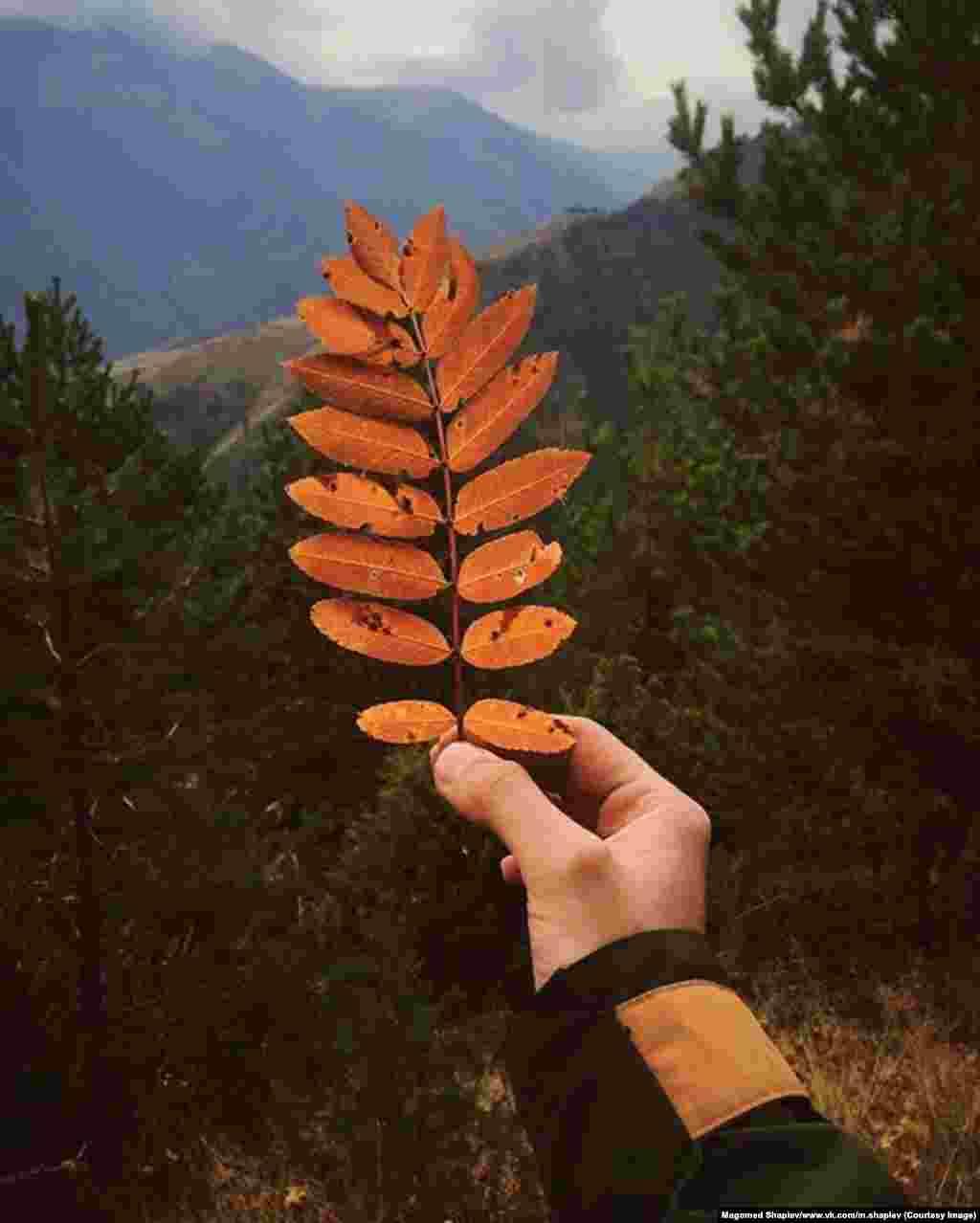 Шапиев говорит, чтофотографировать дикую местность ему особенно нравится осенью.