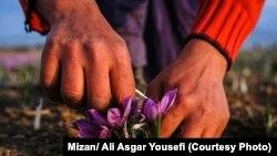 ایران زعفران را با برندهای افغان صادر میکند