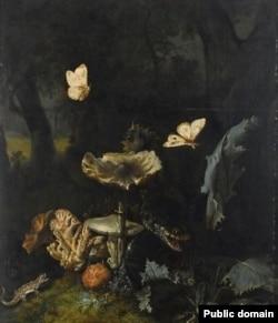 Ота Марсэўс ван Скрык, «Лясное покрыва з грыбамі, асотам, зьмяёй, яшчаркай, сьлімаком, квакшай і двума начнымі матылькамі»