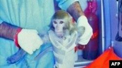 Кадр репортажа, на котором видно, как иранский ученый держит живую обезьяну. Место съемки неизвестно. 28 февраля 2013 года.