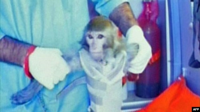 Iran says this monkey was launched to the edge of space. No name for the primate has been given.