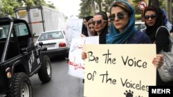 Animal rights activists in Shiraz protesting the purported dog culling.