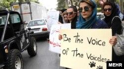ادامه اعتراض به سگ کشی در شيراز