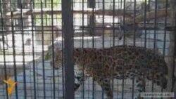 Երեւանի կենդանաբանական այգին 70 տարեկան է