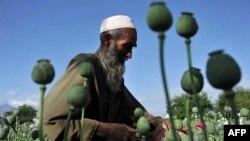 Əfqanıstan