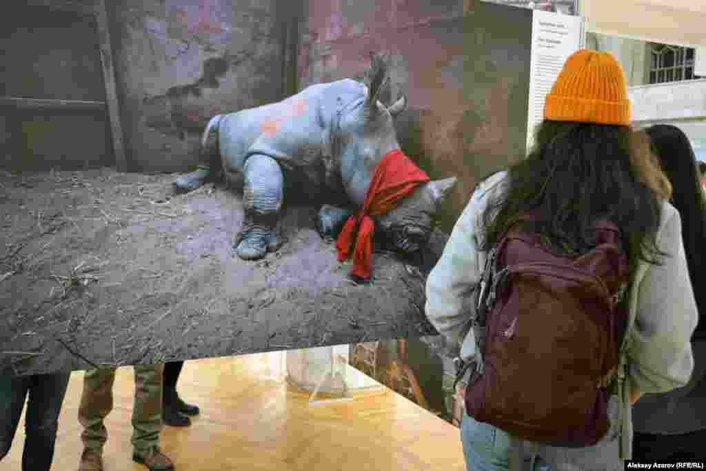 """Оңтүстік Африка фотографы Нил Элдридждің мына туындысы """"Қоршаған орта"""" категориясы бойынша үздік болып танылған. Ұйымдастырушылар бұл суретті көрменің де баннерінде қолданады. Ол 2017 жылы 21 қыркүйекте түсірілген. Онда Оңтүстік Африка республикасынан Ботсванаға қарай тасымалданып жатқан ұйықтатылған мүйізтұмсық көрсетілген. Оның мүйізі қатты бағаланғандықтан (бір килограм ұнтағы 20-50 мың еуро аралығында тұрады) ОАР-да мүйізтұмсықтарды заңсыз аулау жиілеген."""