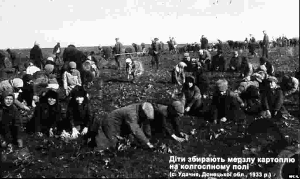 Діти збирають мерзлу картоплю на колгоспному полі. (с. Удачне, Донецької обл., 1933 р.) - Голодомор, голод, 1933
