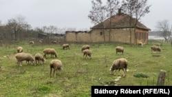 A házak helyén bárányokat legeltet az új tulajdonos.