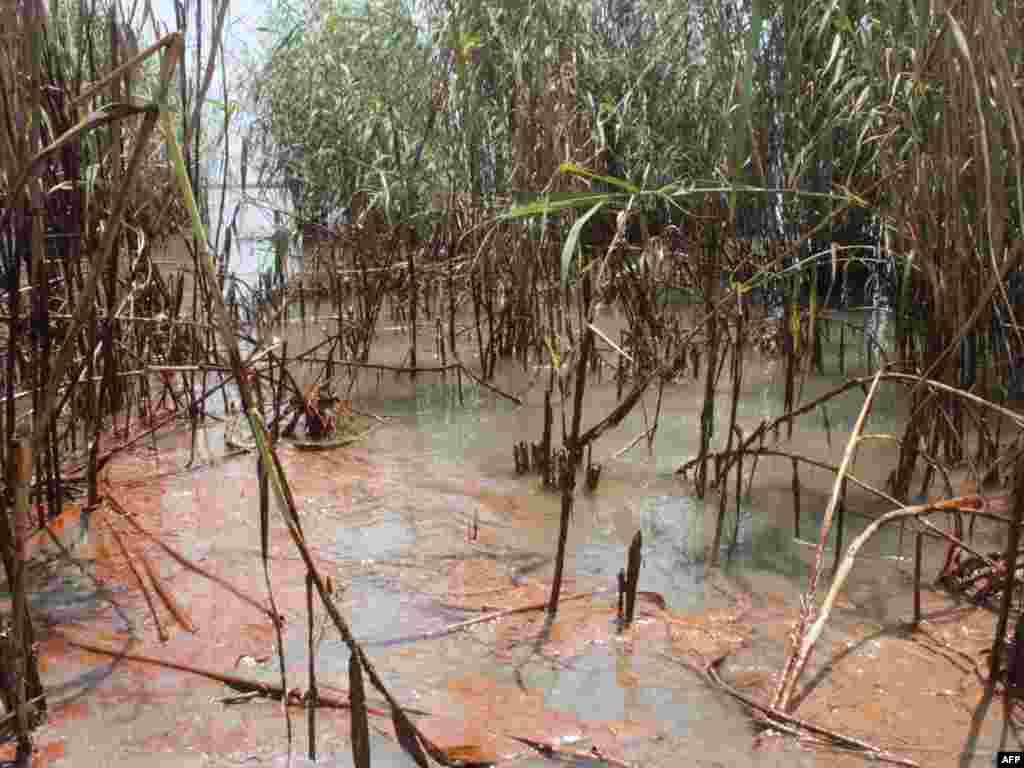 ЗША, Луізіяна: нафта з Мэксыканскай затокі пагражае буйной экалягічнай катастрофай.