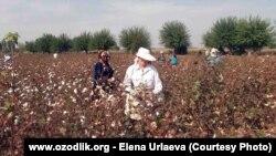 Несмотря на то, что правозащитные организации обвиняют правительство Узбекистана в массовом использовании принудительного труда при сборе хлопка, госдеп США пришёл к выводу, что ситуация в этом направлении улучшается.