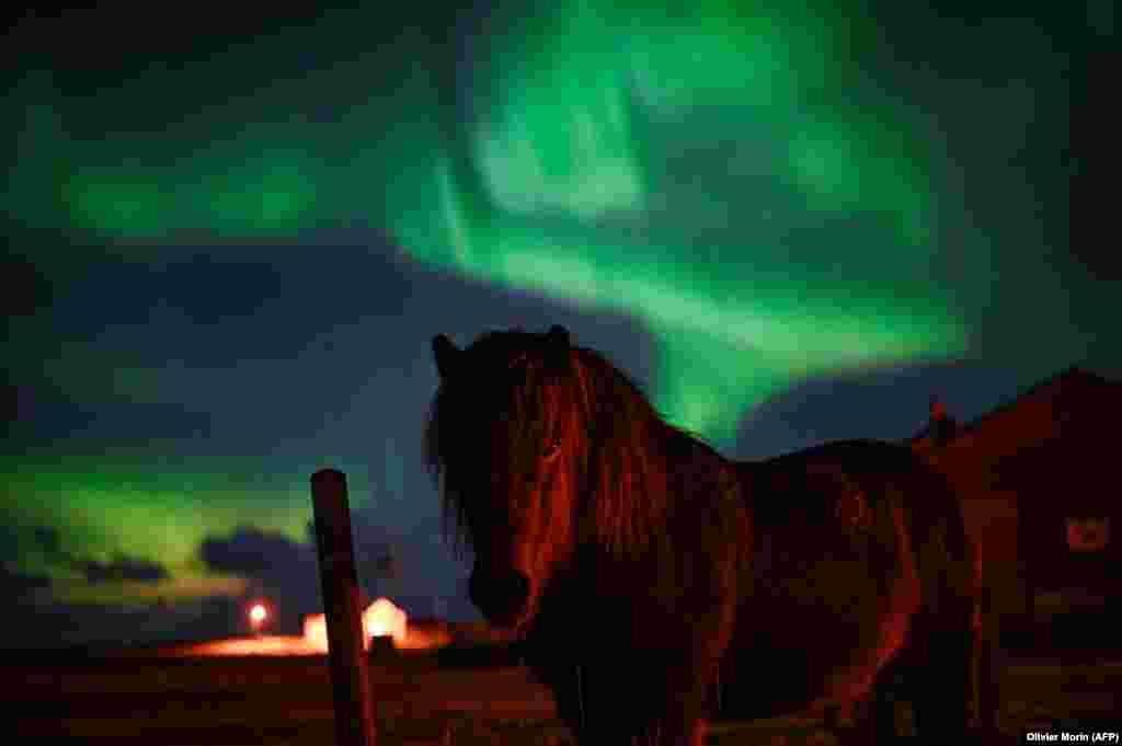 یک اسبچه زیر شفق قطبی در شمال نروژ. شفق قطبی زمانی ایجاد میشود که آسمان شب را نورهای رنگین و مواج در بر میگیرند. این پدیده معمولا در نزدیکی قطبها قابل رویت است.