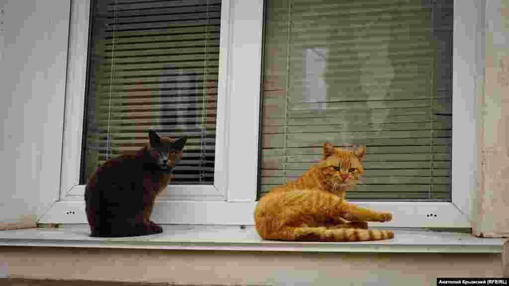 Весняний Інкерман. Два коти незадоволені, що фотограф порушив їхній спокій