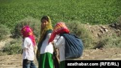 Туркменистан, хлопковые поля в провинции Лебаба
