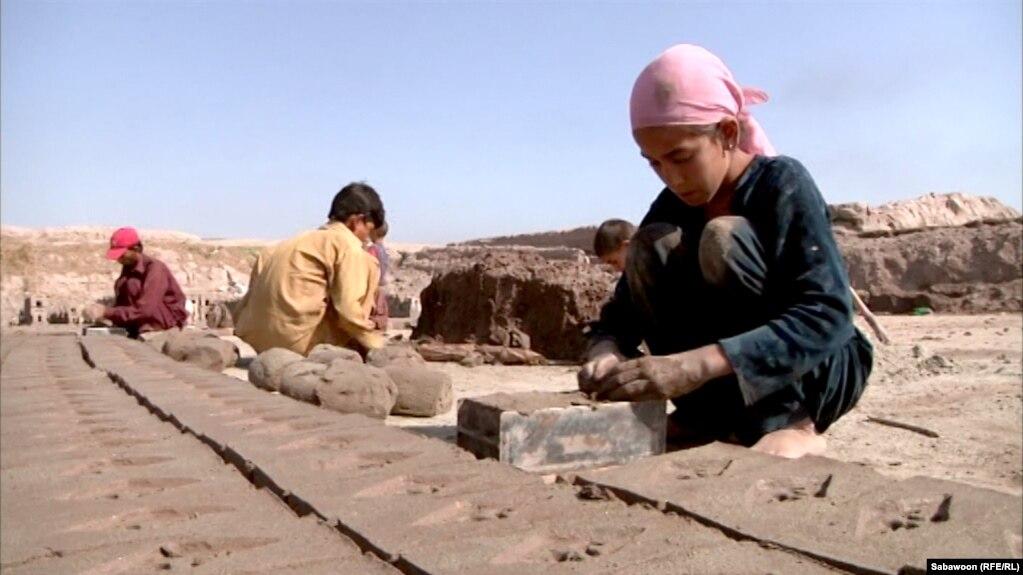 Сегиздеги Хамида Хан үй бүлөсүндөгү чоңдорго жардам берип, кыш куюшууда. 2012-жылдын августу