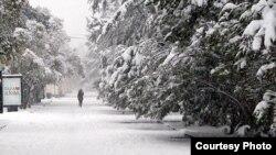 На Сухум обрушился снегопад еще более обильный, чем полмесяца назад. Фото: kavkaz-uzel.eu