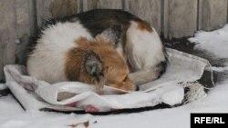 Câine vagabond la Chișinău